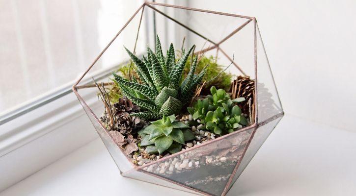 Φανάρια terrarium με παχύφυτο και μος