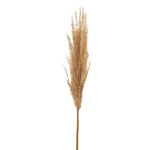 ΚΑΛΑΜΙ PAMPAS GRASS ΦΥΣΙΚΟ ΦΟΥΝΤΩΤΟ